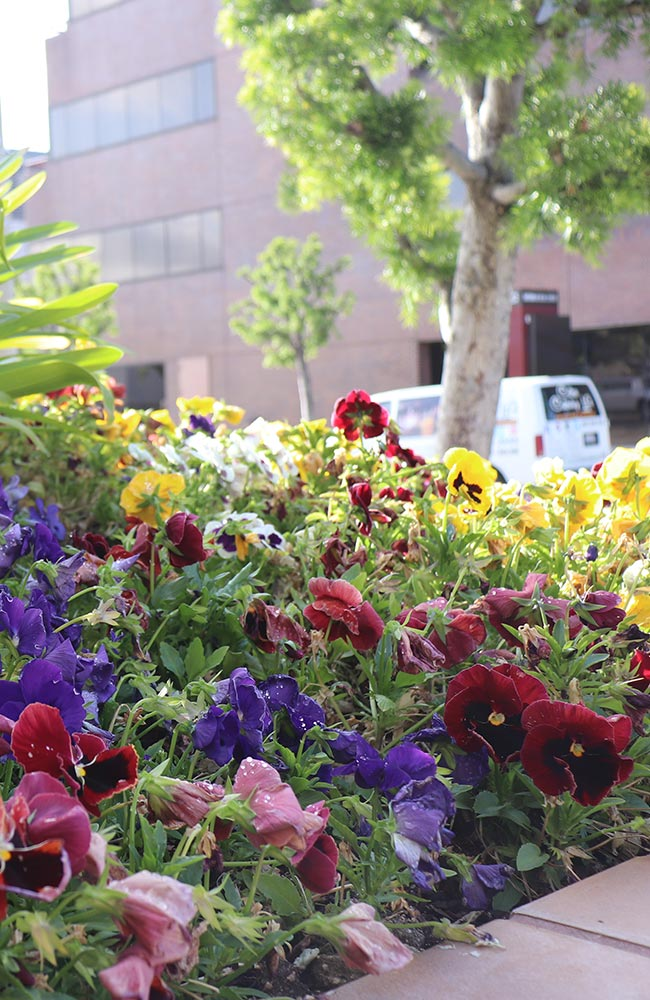 Flowers outside the Huntington Family Medicine building